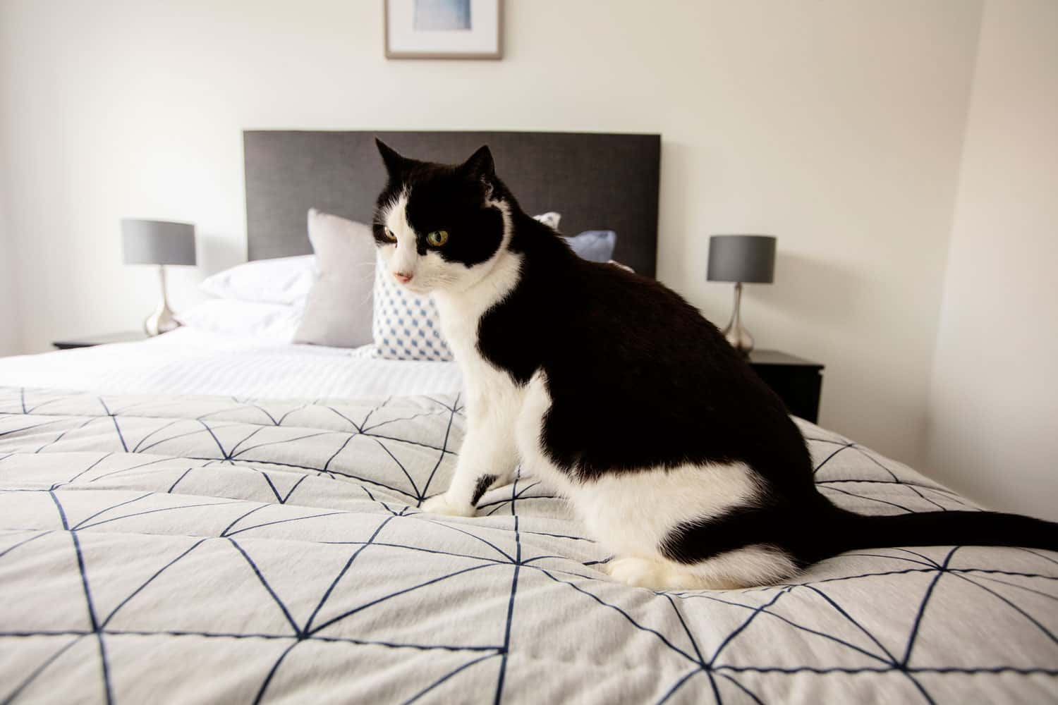 cat friendly apartments at fernbank churchtown