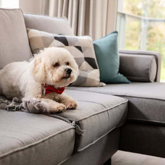 dog or cat friendly Fernbank Apartments Churchtown Dublin Dog Friendly Apartments