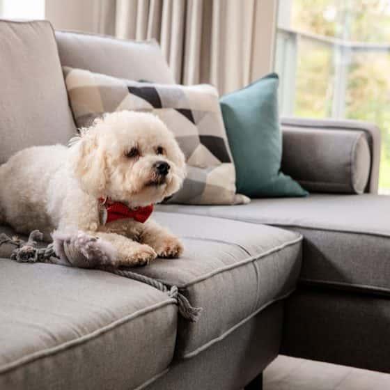 Fernbank Apartments Churchtown Dublin Dog Friendly Apartments